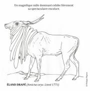 Eland-drape-male-dominant