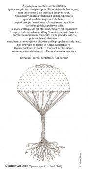Meduse-volante-scaled
