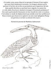 Oiseau-inconnu-scaled