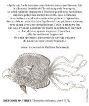 Chetodon-martinet-scaled