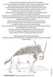 Hyene-hirsute-scaled