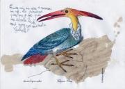 Oiseau-inconnu-par-Gabielle-P